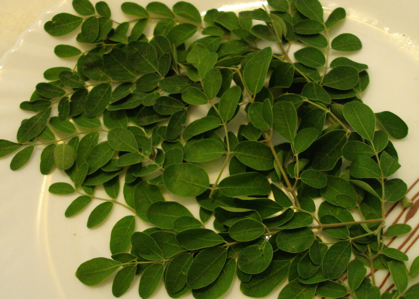 Chipilin Leaves http://zoom50.wordpress.com/2010/04/28/arbol-de-marangothe-moringa-tree-moringa-oleifera/